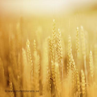 Hur hittar man svensk forskning om glutenintolerans (celiaki)?