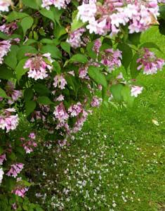 Blogginlägg: Atjoo extra pollen!
