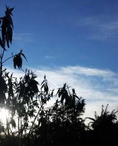 Himlen är blå