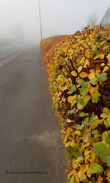 Nyhet: Hösten tågar in dags att plocka fram Vitamin-D tillskottet
