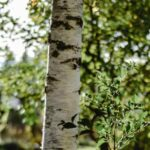 Vad är pollenallergi, säsongsbunden hösnuva och allergisk rinit?